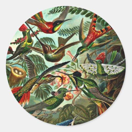 Trochilidae - Hummingbirds Stickers