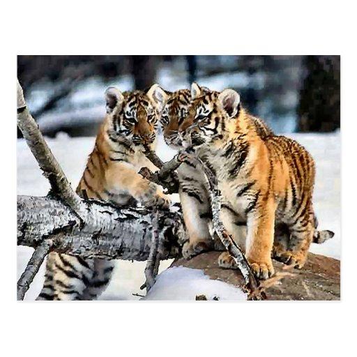 Trois tigre CUB en cadeaux d'art de neige Cartes Postales