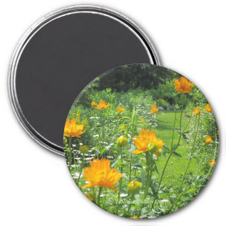 Trollius Golden Queen Magnet