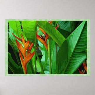 Tropic Birds 36 x 24 Poster