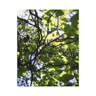 Tropic catalpa tree wild nature canvas print