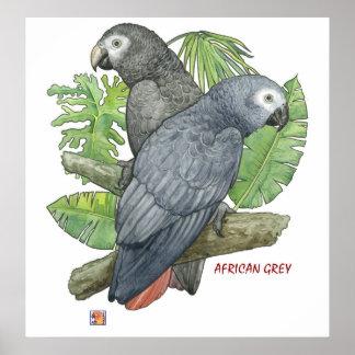 Tropical African Greys Print