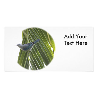Tropical Bird Picture on Palm Tree Customized Photo Card