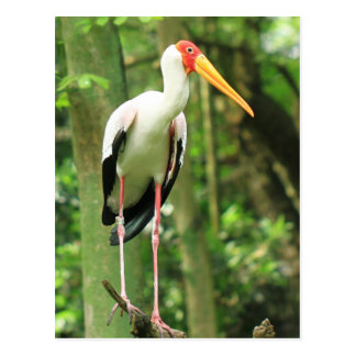 Tropical Bird Postcard