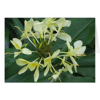 Tropical Botanical Flower Note Card