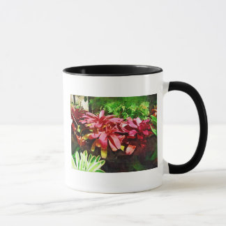 tropical bromeliad, fairchild tropical garden, mia mug