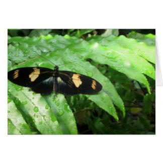 Tropical Butterflies Card