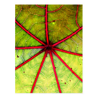 Tropical Castor Leaf Structure Postcard