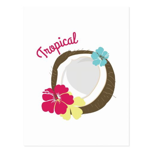 Tropical Coconut Post Card