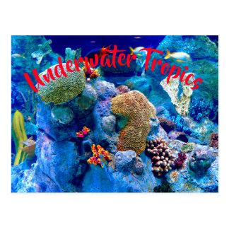Tropical Colorful Undersea Coral Reef Postcard