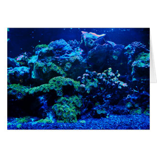 Tropical Coral Reef Card