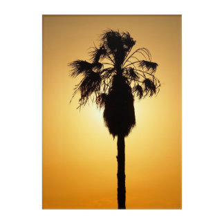 Tropical Fan palm Acrylic Wall Art