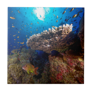 Tropical Fish Great Barrier Reef Coral Sea Gift Tile