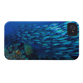 Tropical Fish Great Barrier Reef Coral Sea iPhone 4 Case-Mate Cases