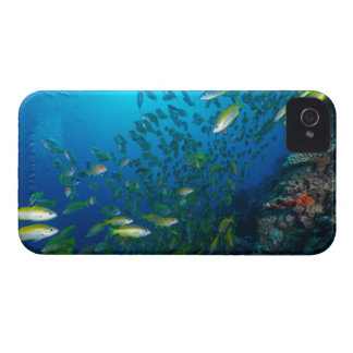 Tropical Fish Great Barrier Reef Coral Sea iPhone 4 Cover