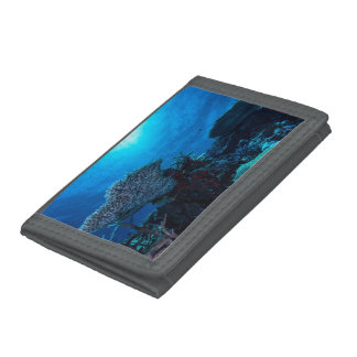 Tropical Fish Great Barrier Reef Coral Sea Trifold Wallets