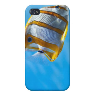 Tropical Fish Iphone Case iPhone 4/4S Cases