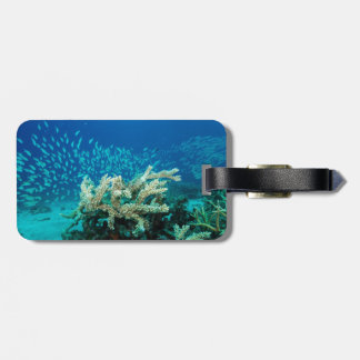 Tropical Fish of the Coral Sea Luggage Tag