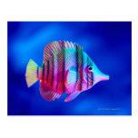 Tropical Fish Postcard