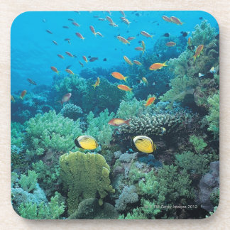 Tropical fish swimming over reef beverage coaster