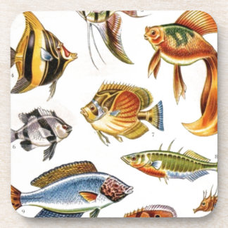 Tropical Fishes Coasters