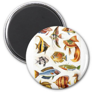 Tropical Fishes Magnet