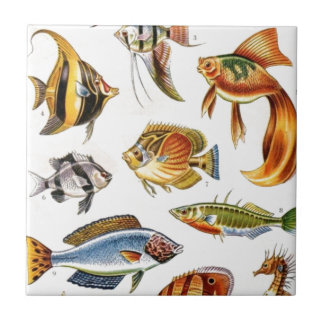 Tropical Fishes Tile
