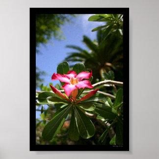 Tropical Flora Poster