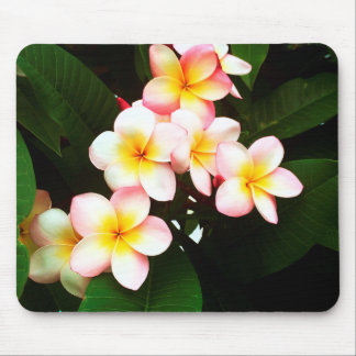 Tropical Frangipani Flower Mouse Pad