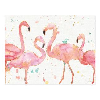Tropical   Gathering of Flamingos Postcard