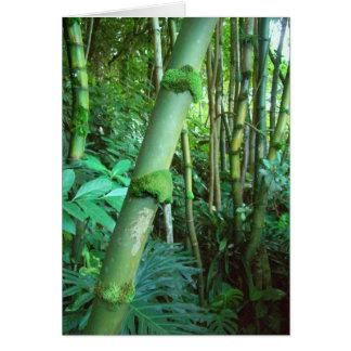 Tropical Green Bamboo Card