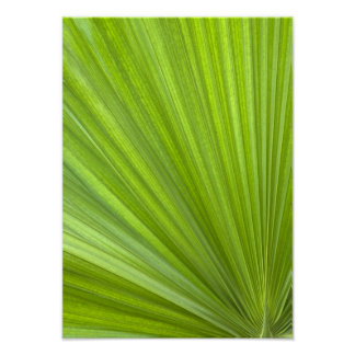 Tropical Green Palm Frond Posters