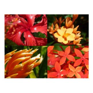 """Tropical Heat"" Postcard"