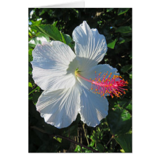 Tropical Hibiscus Card