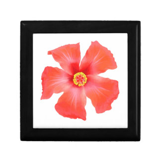Tropical Hibiscus Flower Vector Gift Box