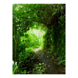 Tropical Hiking Trail Poster