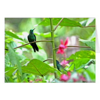 Tropical Hummingbird and Flowers Card