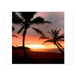 Tropical Island Palms Dominican Republic Postcard