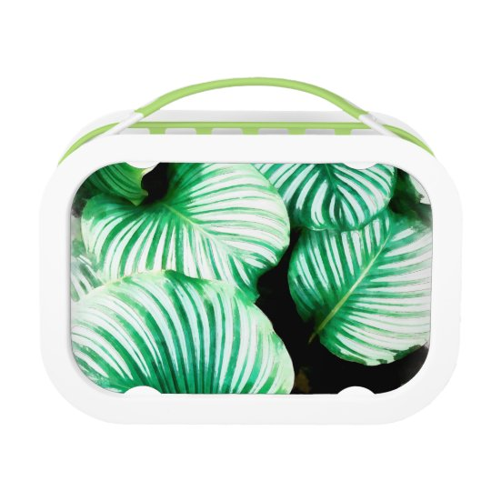 Tropical Leaves Lunch Box