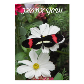 Tropical Longwing Butterfly Photo Card