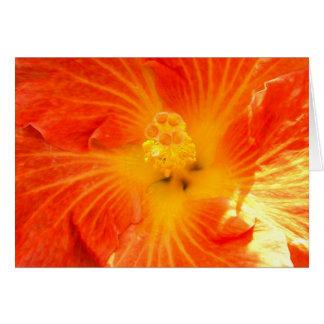 Tropical Orange Hibiscus Card