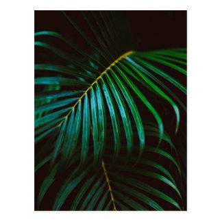 Tropical Palm Leaf Calm Green Minimalistic Postcard