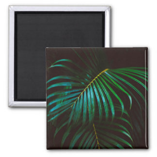 Tropical Palm Leaf Calm Green Minimalistic Square Magnet