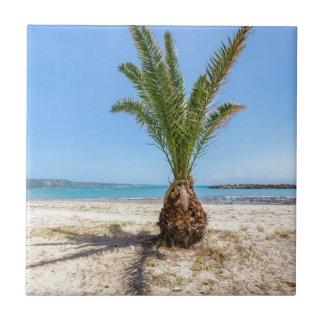 Tropical palm tree on sandy beach ceramic tile