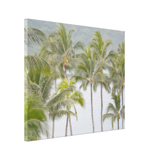 Tropical Palm Trees at Kalapaki Bay Canvas Print