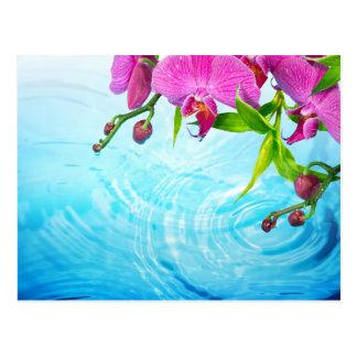 tropical paradise,zen,peace,orchid,blue water,yoga postcard