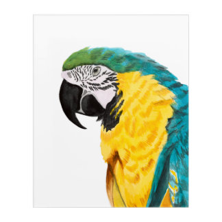 Tropical Parrot Bird Acrylic Print