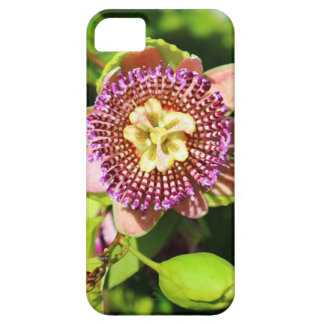 Tropical Passion Fruit Flower iPhone 5 Cover