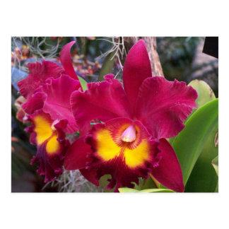 Tropical pink fuschia cattleya orchid flower postcard