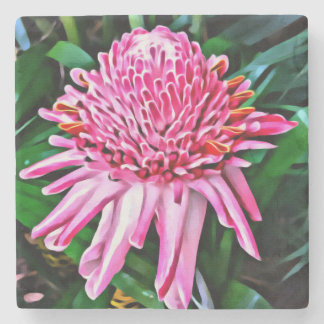 Tropical Pink Ginger Flower Coaster
